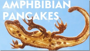 Amphibian pancakes (youtube)